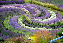 Garden Inspiration / by Juliana Catlin
