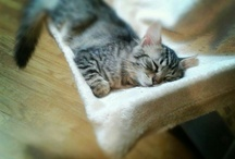 Tama & Nikon - two cats / Tama & Nikon  #cat #pet #Italy