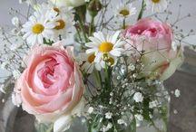 Flowers & plants / Plants flowers bouquets interior