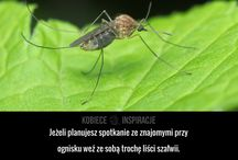 owady usuwanie