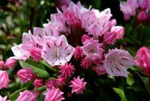 Nasze Rośliny - Gargul Gaj Gartex - Our Plants / Rośliny w naszym ogrodnictwie - Plants in our nursery  http://gartex.pl/  501101160 Gaj - Myślenicka 15 32-031 koło Krakowa