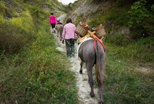 Settimana del Buonvivere 2015 / Memories of Buon Vivere blog tour 2015 #romagna #italy #emiliaromagna #travel