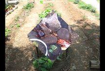 Organic gardening: How to best growing an organic vegetables garden