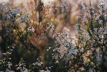 Flowers - 花 -