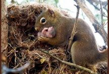Cute Squirrels / by Lorie Getsfrid