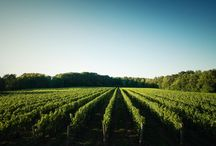 M Cellars Winery / Artisan, handcrafted, cool climate wines.