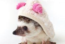 Hedgehogs/porcupines