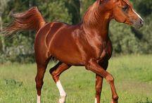 Paardenplaatjes