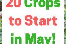 Garden Retail Marketing Ideas