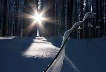 Winter-Snow❄⛄