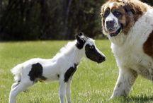 Legcukibb és legérdekesebb állatok