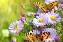 Fleurs, végétaux et jardins