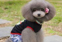 Asian Fusion grooming / Cute cute cuts