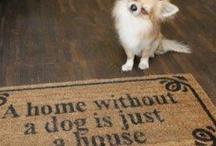 Chihuahuas rule  / by Patti Anton