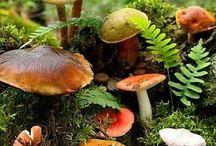 Mushroom Magic / by John Tate