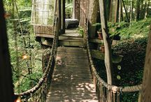 Forest Dwelling / by Bill Pfeifer