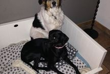 Doggies! / Onze en andere lieve honden!❤️