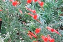 Hillside Plants