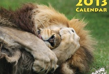 2013 Big Cat Rescue Calendar!