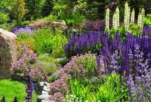 Colorado Garden Ideas