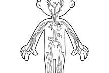 il corpo umano elementari