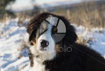 Animals / Animal images on Photofolio.co.uk