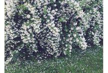 blommig kärlek