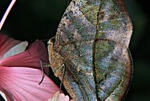 Na křídle motýla seděla Láska