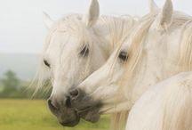 horses XD
