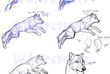Refs animaux anatomie