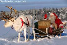 Los renos de Papá Noel Santa Claus en Laponia / Descubre los míticos ayudantes de Papá Noel, los renos en Laponia, Finlandia. Averigua sus nombres, aprende lo que comen, cómo los renos puede volar y mucho más.