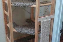Cats' corner