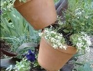 Planters teracotta pots