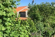 Flowers @ Lådfabriken / Our garden's highlights with over 150 roses and many more