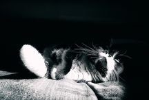 cats black and white photographie