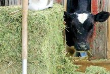 het boerderijleven