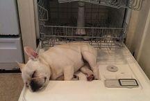 frenchies love dishwasher!