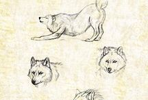 Wolves drawings
