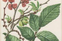 vintage botanische prenten