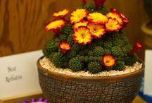 Cacti & Succulents spp