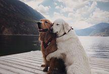 Hunder / Er de ikke søte?