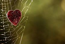 Hearts / by Jayne Marie