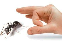 Pest Inspections / Pest Inspection Perth is one of the leading pest control companies addressing all your pest problems, offering the services in the Perth metropolitan area.