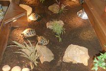 Luxury Indoor Field Tortoise  Home