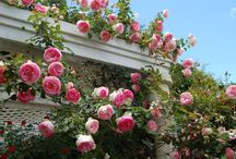 Go Vertical / Climbing roses make a great addition to the garden