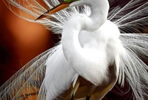 Las 35 mejores fotos de vida salvaje de National Geographic / fotos national geographic