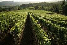Oregon Wines / Wines from the great state of Oregon  / by Wine Library
