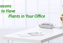 Go Green in Office / Having a bit of nature within the office interior can help the employees in many ways. Know how plants help us and get ideas to go green in office.