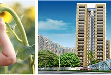 Gulshan Ikebana / Gulshan Ikebana is a residential project by Gulshan homz at sector 143 Noida. Gulshan Ikebana Noida offering 3 BHK apartments, Call Finlace for booking.