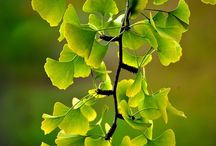 Nature - Leaves
